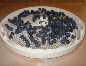Blueberries Ready for the Dehydrator